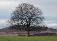 Our favourite tree in the yorkshire dales.